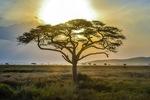 Serengeti Miracles
